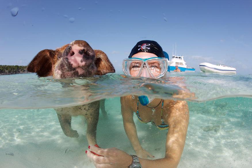 La isla de los cerdos